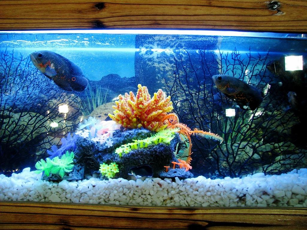 ¿Cómo llevar a cabo una mudanza con un acuario? ¡Es posible!